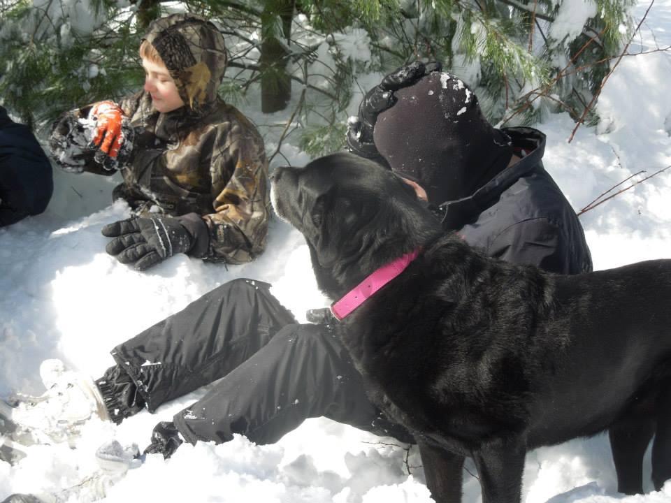 the dog i loved